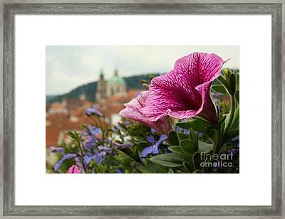 Prague In Bloom Vi - Summer Edition Framed Print
