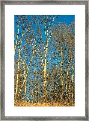 Prairie Autumn 9 Framed Print