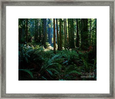 Prairie Creek Redwoods State Park 10 Framed Print