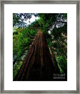 Prairie Creek Redwoods State Park 13 Framed Print