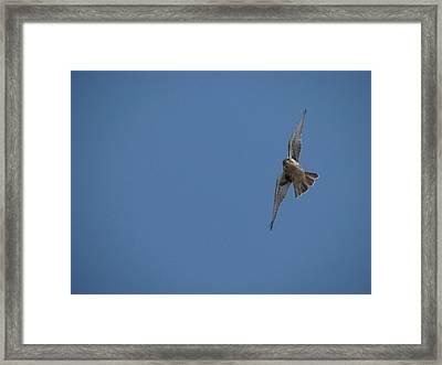 Prairie Diver Framed Print