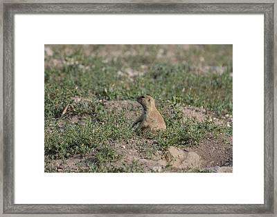 Prairie Dog Ohmmm Framed Print by Rae Ann  M Garrett
