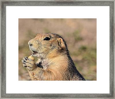 Prairie Dog Framed Print by Robin Williams