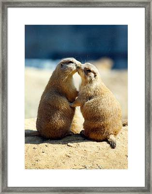 Prairie Dogs Kissing Framed Print