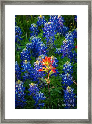 Prairie Fire Framed Print by Inge Johnsson