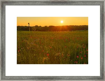 Prairie Flowers With Setting Sun Framed Print by Ed Cilley