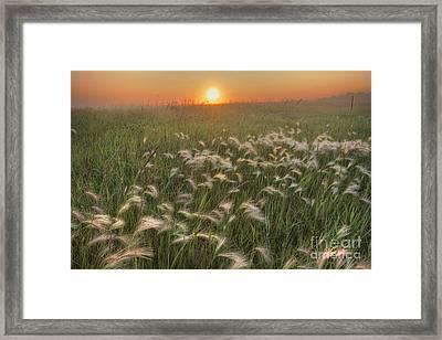 Prairie Foxtails Framed Print by Dan Jurak