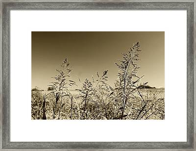 Framed Print featuring the photograph Prairie Grass by Ellen O'Reilly