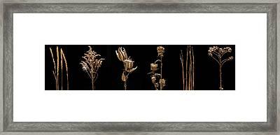 Prairie Plant Life Framed Print