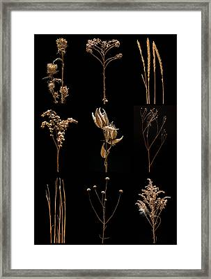Prairie Plant Still Life Framed Print