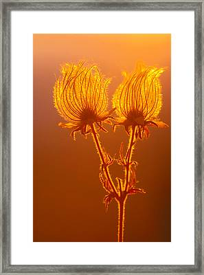 Framed Print featuring the photograph Prairie Smoke by Judi Baker