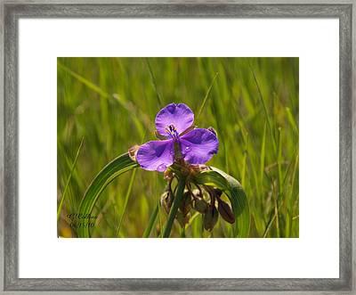 Prairie Wild Flower Framed Print