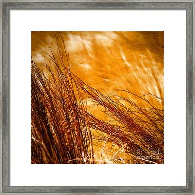 Prairie Winds Framed Print