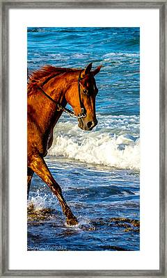 Prancing In The Sea Framed Print