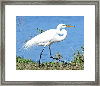 Prancing Framed Print by Julie Cameron