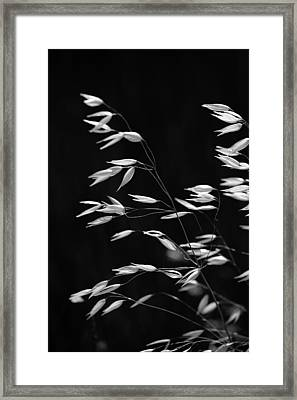 Prarie Grass Framed Print