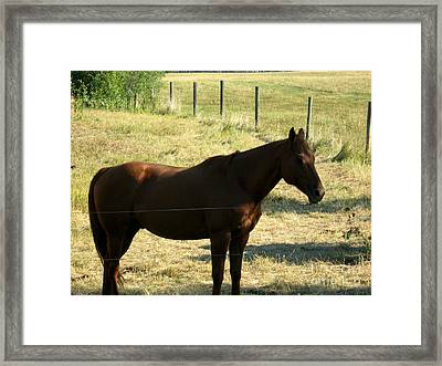 Prarie Stallion In The Shade Framed Print by Barbara Griffin