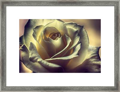 Prayer Candle Rose Framed Print