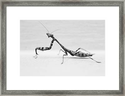 Praying Mantis Good Side Framed Print