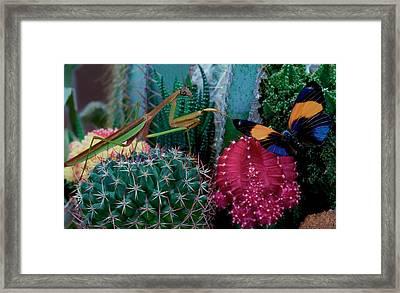 Praying Mantis  Hunting For Prey Framed Print