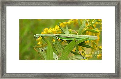 Praying Mantis In September Framed Print by Anna Lisa Yoder