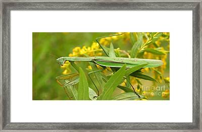 Praying Mantis In September Framed Print by Anna Lisa Yoder