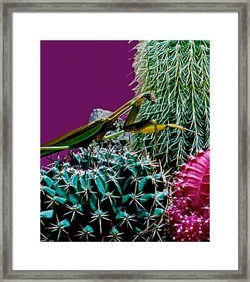 Praying Mantis  Looking For Prey Walking Very Carefully Framed Print