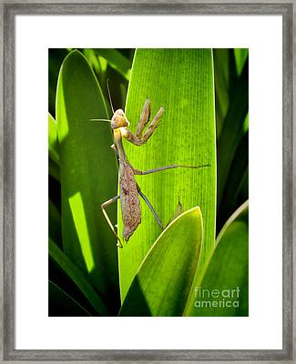 Framed Print featuring the photograph Praying Mantis by Kasia Bitner