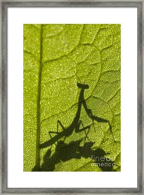 Praying Mantis Silhouette Behind A Leaf Framed Print
