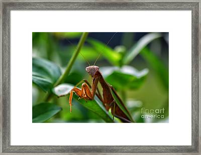 Framed Print featuring the photograph Praying Mantis by Thomas Woolworth