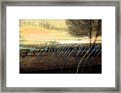 Pre Dawn Life Framed Print by Rich Collins