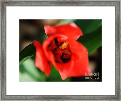 Pre-pollination  Framed Print by Neal Eslinger