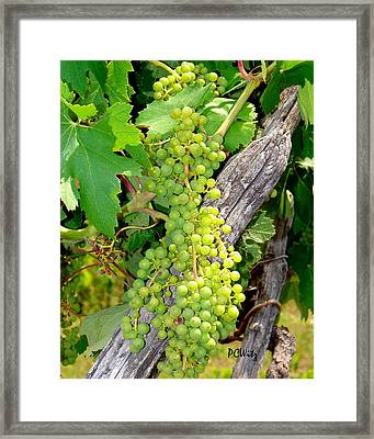 Framed Print featuring the photograph Pre-vino by Patrick Witz
