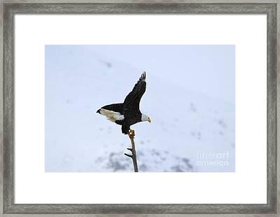 Precarious Perch Framed Print by Mike  Dawson