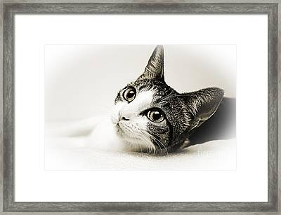 Precious Kitty Framed Print