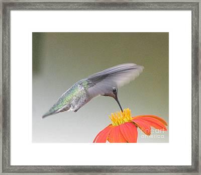 Precision Framed Print by Tina Marie