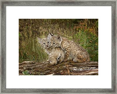 Precocious Partners Framed Print by Elaine Haberland