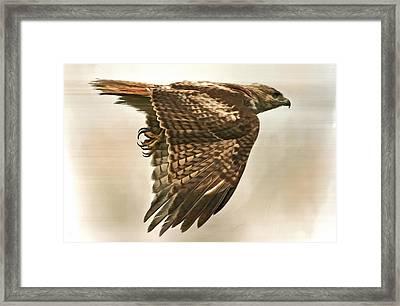 Predator Framed Print by Hazel Billingsley
