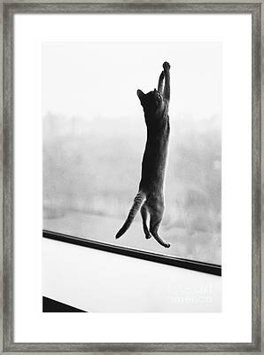 Predator Prey Cat Style Framed Print by Joan Baron