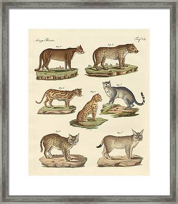 Predators From All Parts Of The World Framed Print