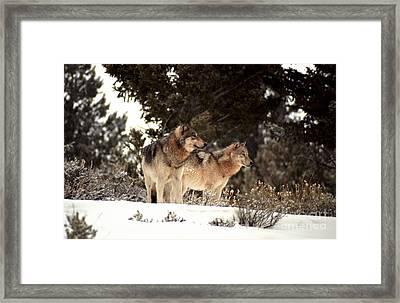 Predators Framed Print by Sharon Elliott