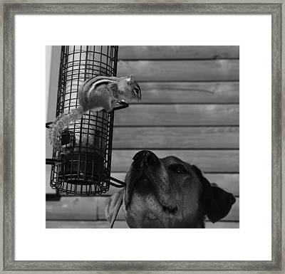 Predicament Framed Print by Mim White