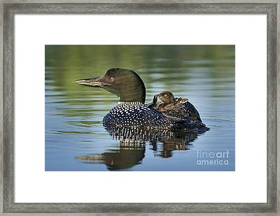 Preening Mommy Framed Print