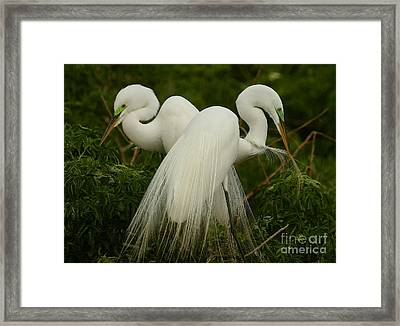 Framed Print featuring the photograph Preening Pair by Myrna Bradshaw