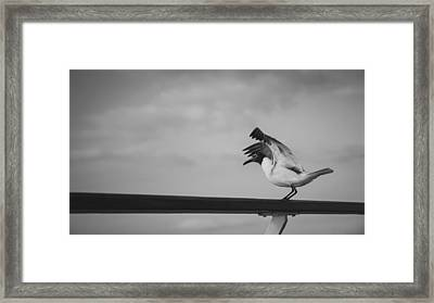 Preflight Framed Print by Maria Robinson