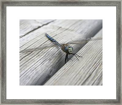 Framed Print featuring the photograph Prehistoric Beauty by Rhonda McDougall