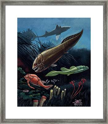 Prehistoric Fish Framed Print by Deagostini/uig