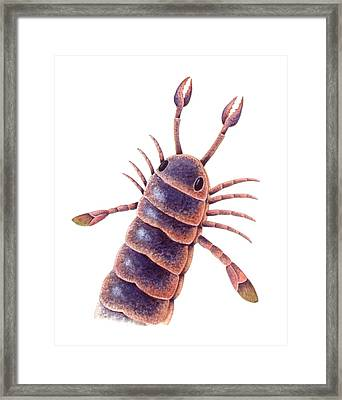 Prehistoric Marine Arthropod Framed Print