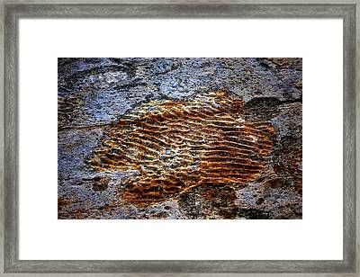 Prehistoric Sea Floor Framed Print