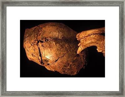 Prehistoric Skull And Leopard Teeth Framed Print